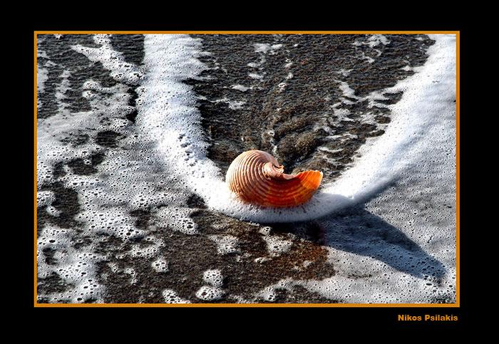 shell, κοχύλι, θάλασσα, κρήτη, ψιλάκης, psilakis